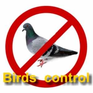 Patti - Bird Control